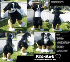 Kit-Kat the Bernese Mountain D by Fleech-Hunter