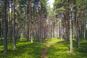 Swedish forest by AcridMonkry
