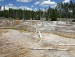 Yellowstone Bacteria by Trisaw1