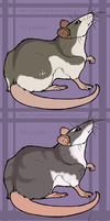 Rats adoptables OPEN by HeatherWolf