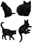 Black Cats by ProdigyDuck
