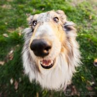 Collie Nose by JessicaDobbs