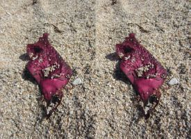 Stereograph - Seaweed on Coarse Sand by alanbecker