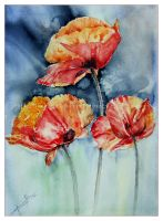 silk Poppies by janipabel