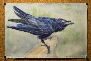 raven watercolor by Sameire