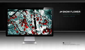 Snow Flower HD Wallpaper by solutionall