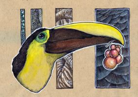 Who can, Toucan by caramitten