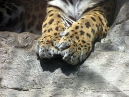 Jaguar Paws by Pawz2142