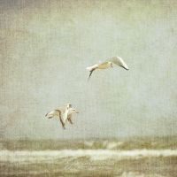 Seagulls V by Justysiak