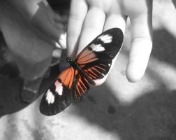 Butterfly Love. by see-you-again