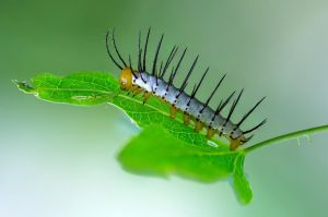 Caterpillar 03 by NellyGrace3103