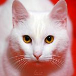 Cat Domination by MarinaCoric