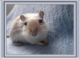 Gerbil by Atheena