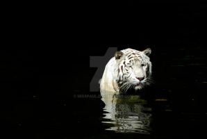 White Tiger by misspaul