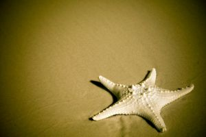 Starfish by stockII