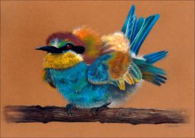 Fluffy bee-eater by Verenique