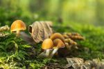 Champignon41 by hubert61