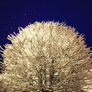 snowtree by indojo