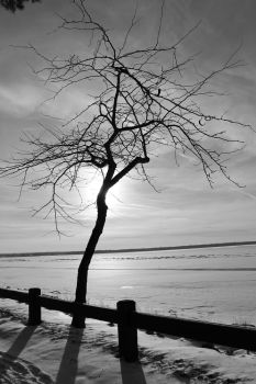 Branches Like Fingers B and W by LifeThroughALens84