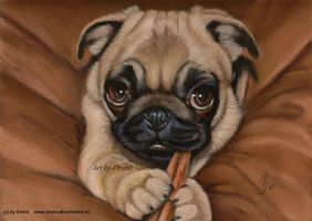 Pug Dog by Drehli