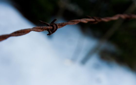 barbed wire 2560x1600 wp by phranzee