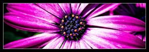Purple Flower by Andso