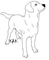 Labrador Retriever Line Art by Wolfs-Hybrid