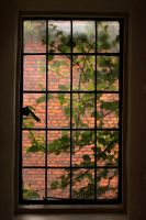Leaves and Bricks by pengirl389265
