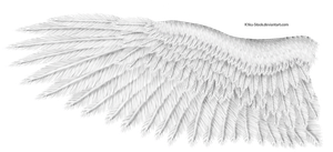 White Eagle Wing by K1ku-Stock