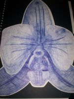 Orchid by sweet-lithium
