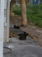 Alley Cats by R1cc4