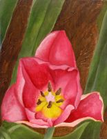 Tulip Painting by kimberly-castello