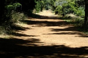 Merricks and Red Hill Horse Riding Trail 2 by andreasphotos