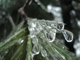 dripping by pungen