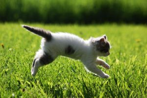 Kitten LEAP by ProcterPhoto