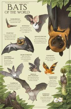 Bats of the World by Mewitti