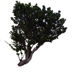 Tree PNG.. by Alz-Stock-and-Art