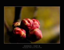 Essence - Part III by DimensionSeven