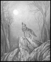 lone wolf by queerartist