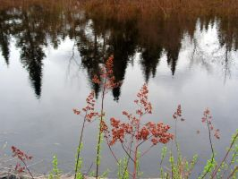 Wild Plants on Tree Reflection by JocelyneR