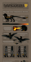 Narogesh reference sheet 2012 by Shegoran