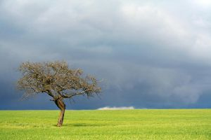 Lone Tree by CD-STOCK by CD-STOCK