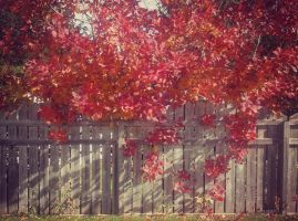 Automne Rouge by VesperRain