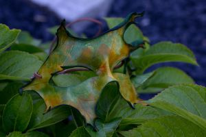 Autumn Handmade Leather Oak Leaf Mask by OsborneArts