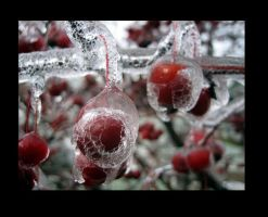 ice storm by heatherspettals