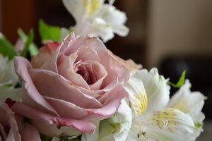 Mother's Day Flowers by Link7788
