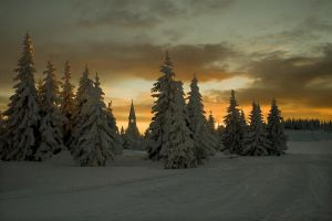 Snowy Dawn 7523689 by StockProject1