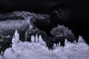 Creatures of the Cold by rici66