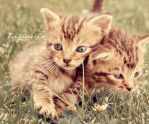 Siamese by Eugenelle
