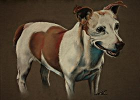 Jack russell Belle by Lmk-Arts
